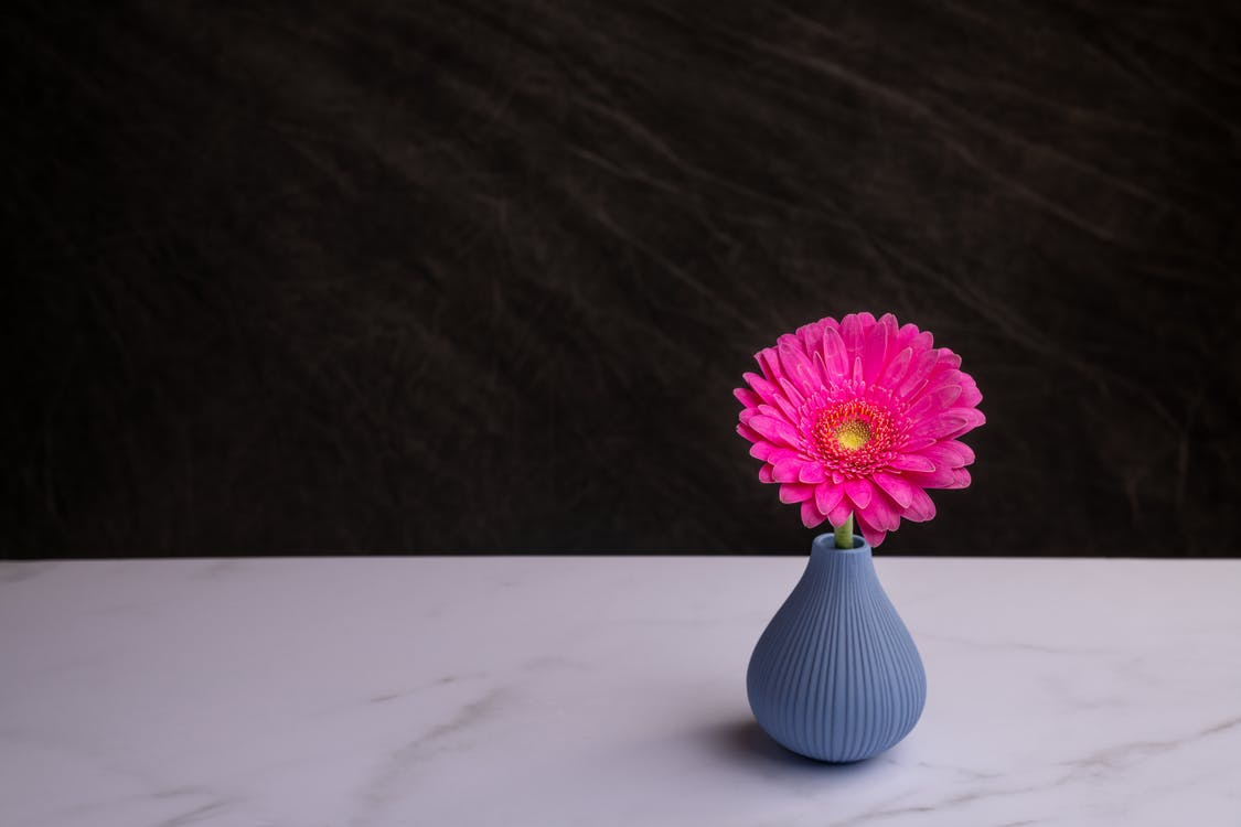 From above of elegant small textured gray vase with gentle pink Barberton daisy flower placed on white marble surface