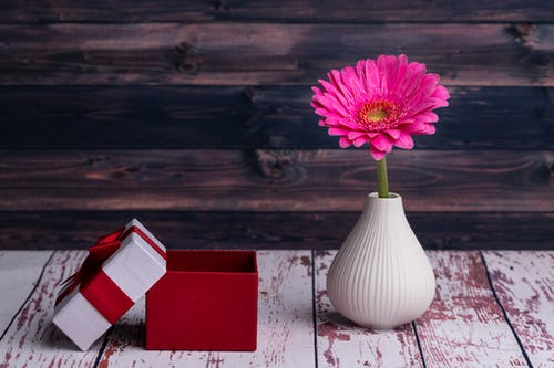 Red and white gift box placed near delicate pink Barberton daisy flower in ceramic vase arranged on shabby wooden table