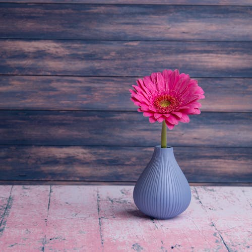 Small gray textured vase with vivid pink Gerbera jamesonii flower placed on timber table in studio