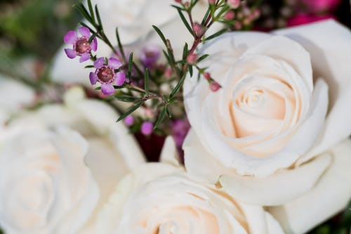 High angle closeup of elegant bouquet with gentle white roses and Chamelaucium uncinatum flowers in daylight