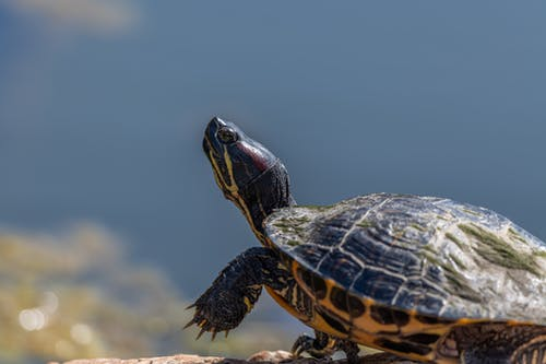 Turtle crawling on ground in sunny nature