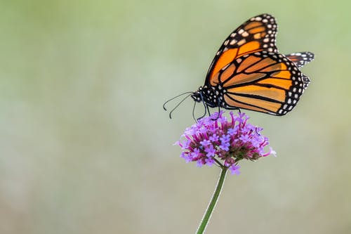 Butterfly sitting on purple flower in nature