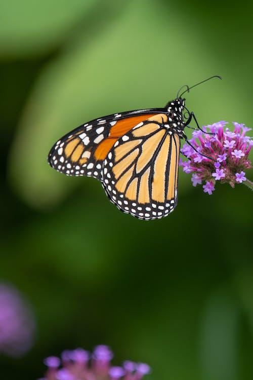 Orange butterfly sitting on fragrant blooming flower