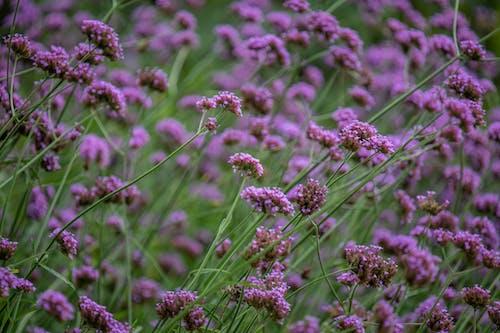 Blooming purple wildflowers on lush meadow