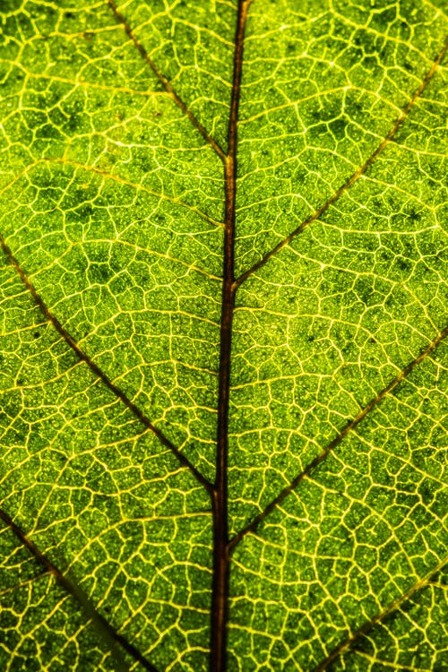 Textured background of lush green leaf