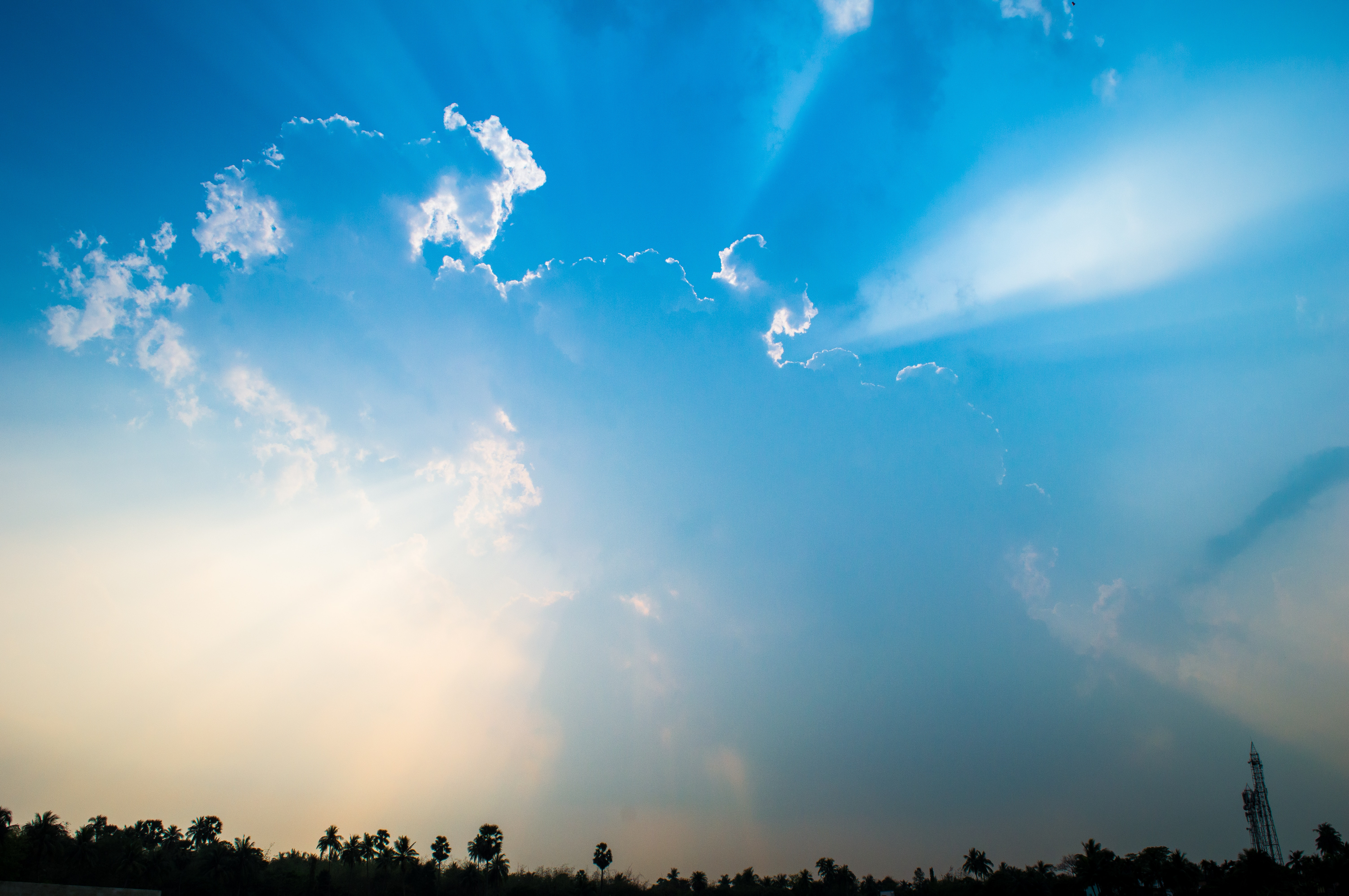 Trees Under Blue Sky And White Clouds Free Stock Photo