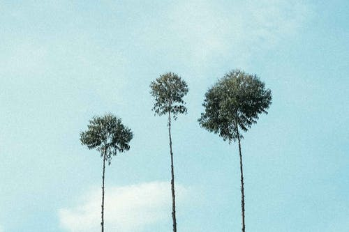 Foto profissional grátis de ao ar livre, arte, árvore, azul