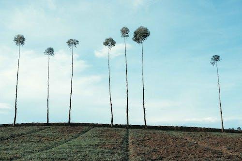 Foto profissional grátis de agricultura, ao ar livre, área, árvore