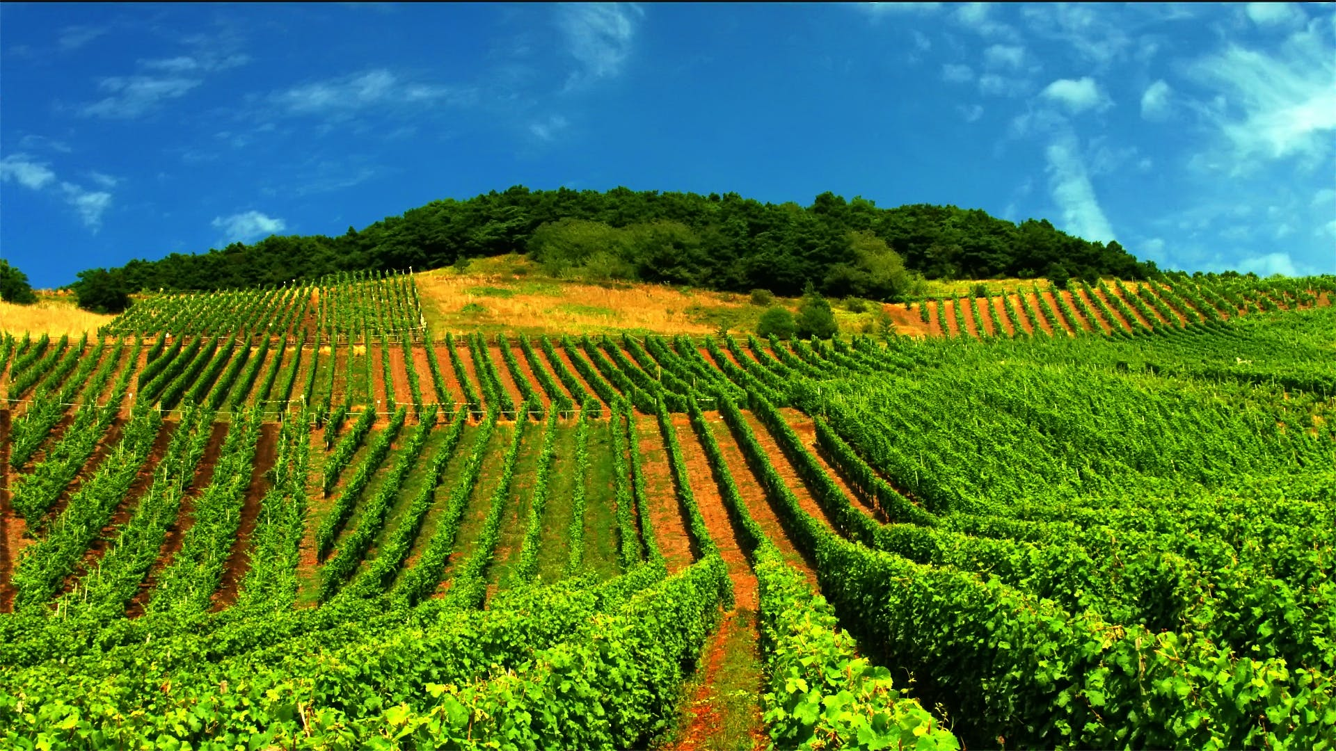 Free stock photo of landscape, winery