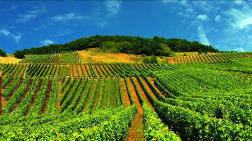 Photos gratuites de cave viticole, paysage