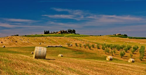 Hay Rolls on Grass Field