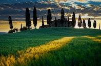 dawn, sunset, field