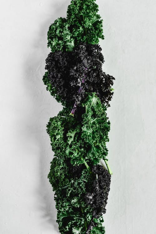Close-Up Shot of Kale on a White Surface