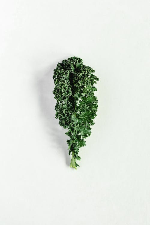 Close-Up Shot of a Kale on a White Surface