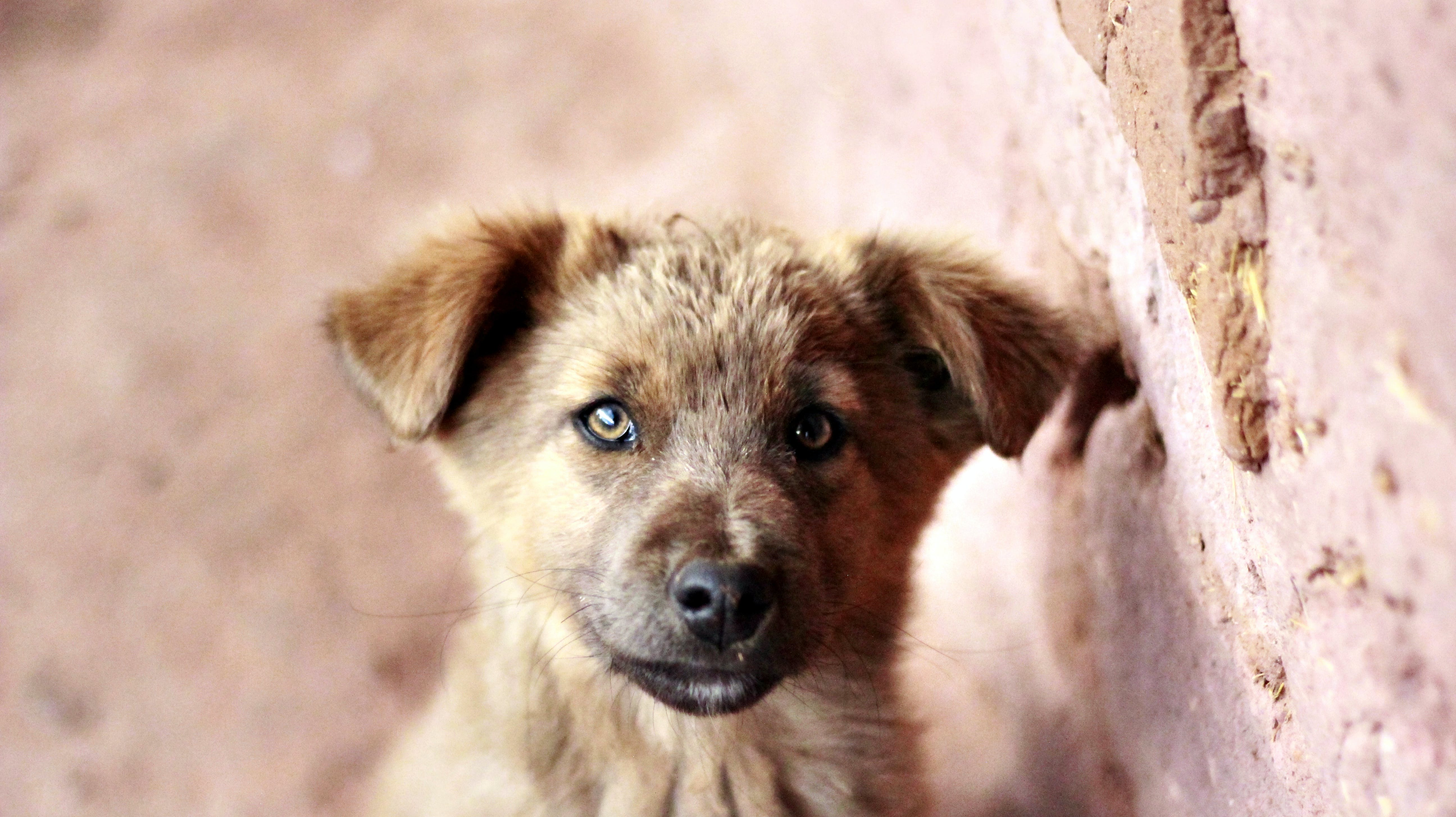 Brown Puppy Beside Brown Brick Wall Selective Focus Photography