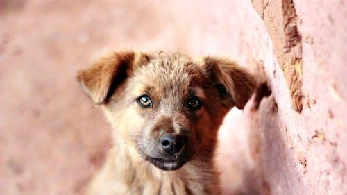 Gratis arkivbilde med dyr, hårete, hund, kjæledyr
