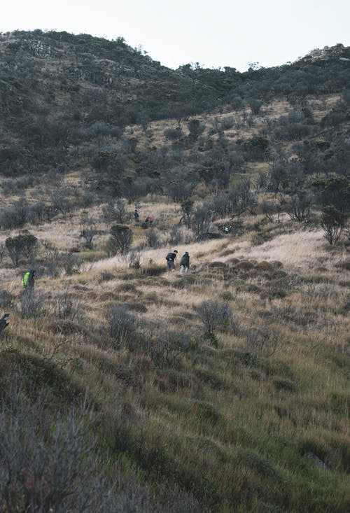 Anonymous backpackers strolling on mountain slope with trees and grass under clear sky