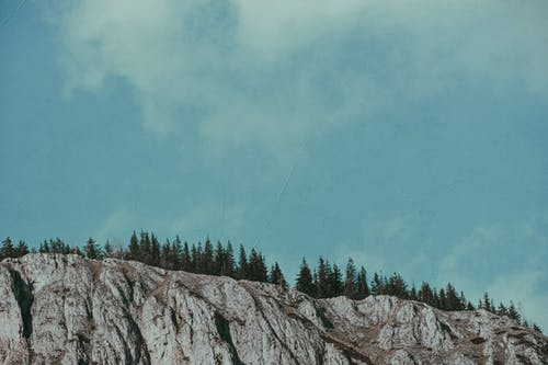 Snowy mountain ridge with fir forest on top