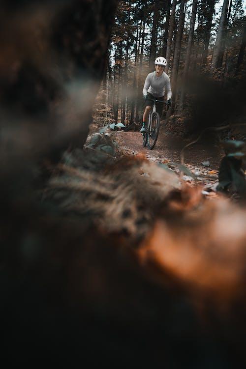 Darmowe zdjęcie z galerii z droga gruntowa, drzewa, hełm