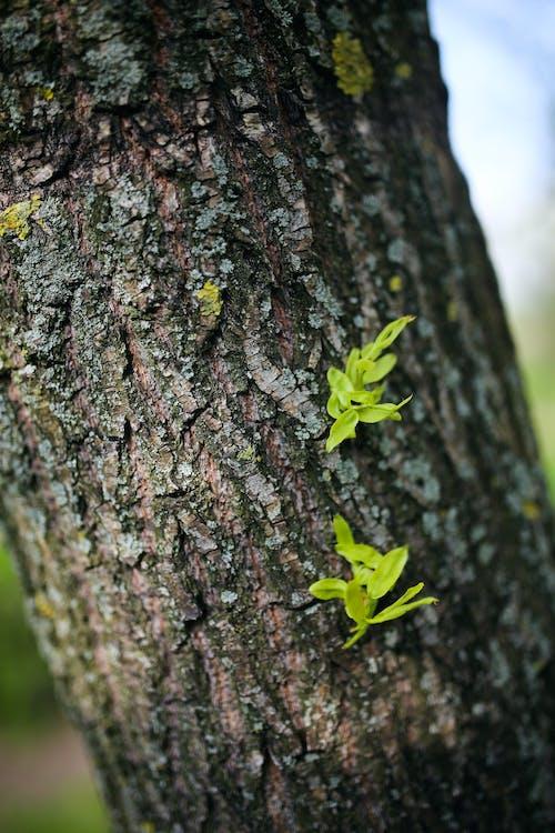 Kostnadsfri bild av bark, färg, flora, grön