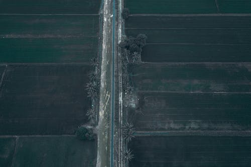 Aerial view of empty straight asphalt road going through agricultural plantation in rural area