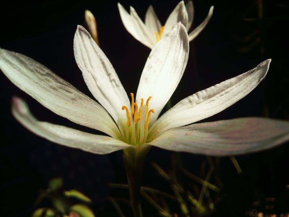 detailný záber, flóra, kvet