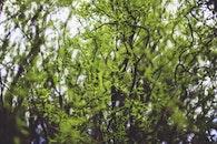 leaf, spring, leaves