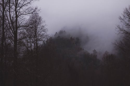 Green Trees Under White Sky