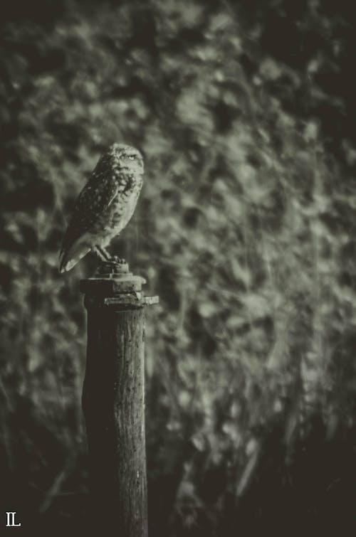 Δωρεάν στοκ φωτογραφιών με κουκουβάγια