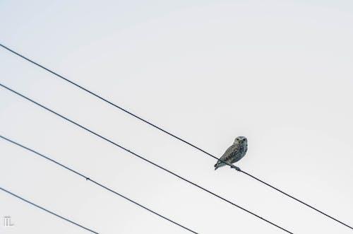 Ilmainen kuvapankkikuva tunnisteilla pöllö