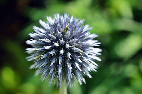 Fotobanka sbezplatnými fotkami na tému flóra, krásny, kvet, lupene