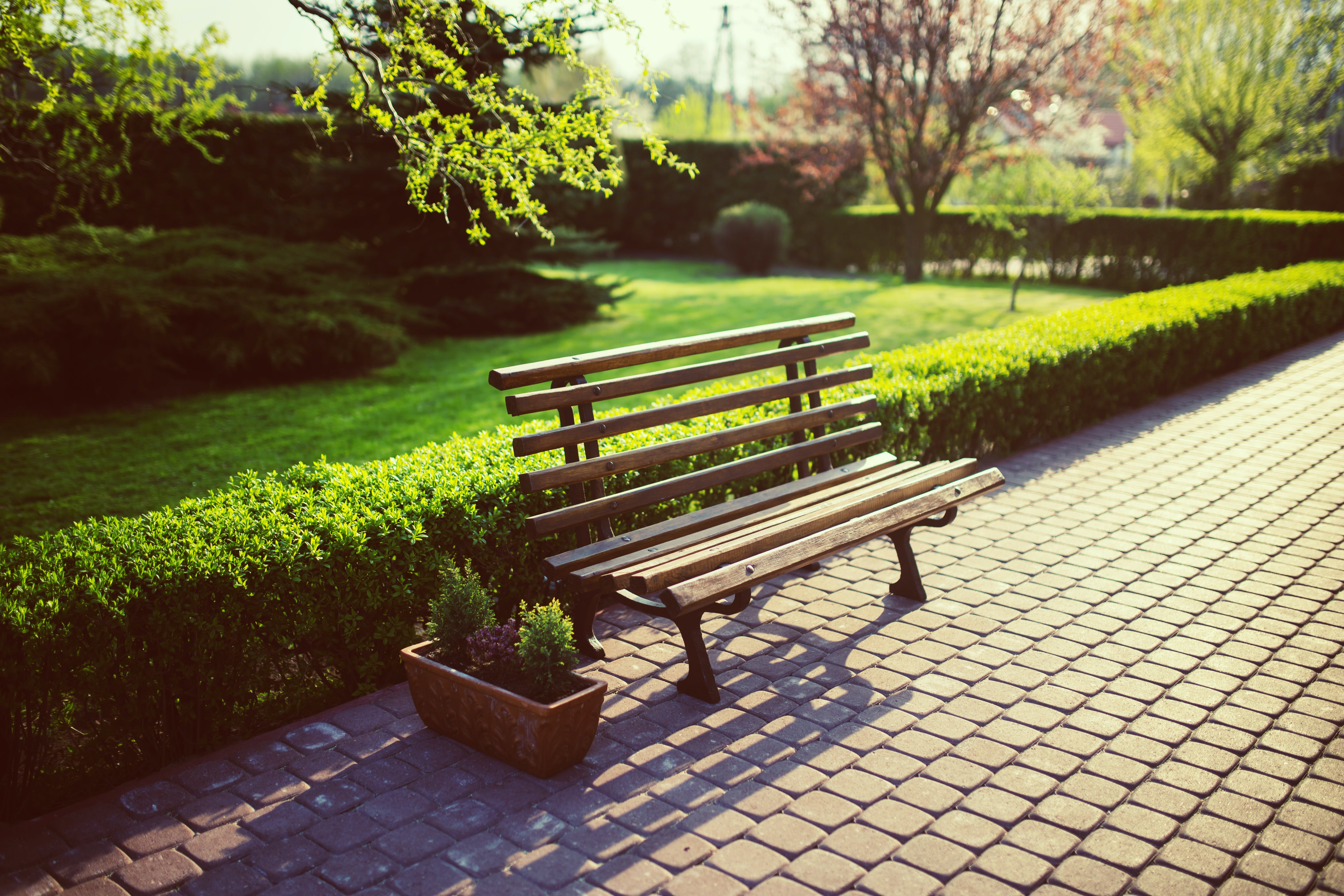 Bench in the garden