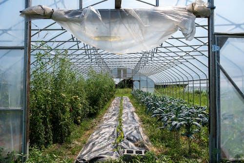 Immagine gratuita di agricoltura, articoli di vetro, azienda agricola