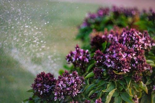 Immagine gratuita di fiori, giardino, giardino di fiori