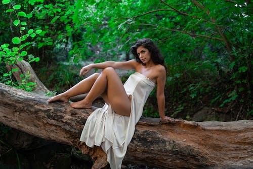 Photos gratuites de arbre, attirant, brouiller, brune