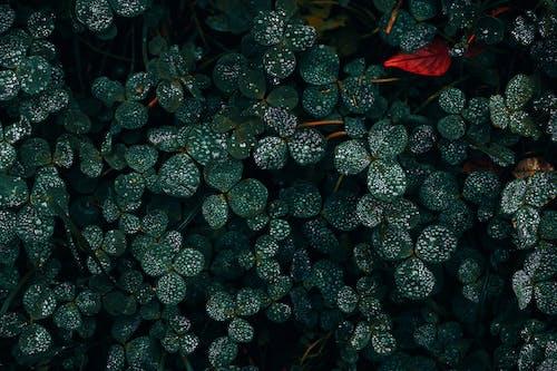 Foto profissional grátis de ao ar livre, arbusto, aumento
