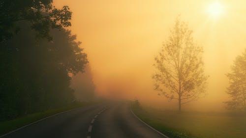 Бесплатное стоковое фото с дерево, дорога, дымка
