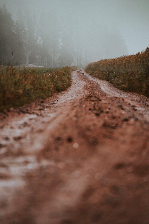 Brown Dirt Road Between Green Grass Field