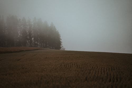 Green Trees on Brown Field during Foggy Day