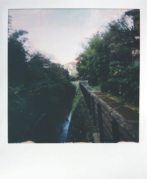 Gratis arkivbilde med blad, bro, elv