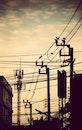 city, bird, line