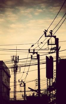 Free stock photo of city, bird, line, life
