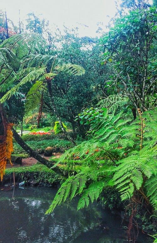 景觀, 樹, 水, 雨 的 免費圖庫相片