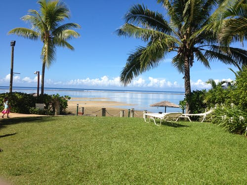 Free stock photo of beach, fiji, holiday, palm tree