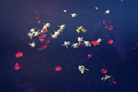 Free stock photo of water, petals, ground, flower