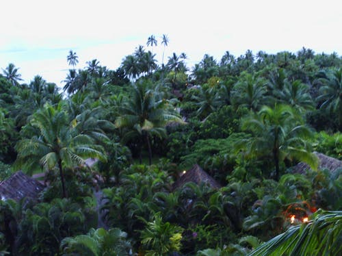 Free stock photo of fiji, holiday, palm trees, relaxing