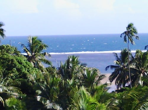 Free stock photo of beach, fiji, holiday, palm trees