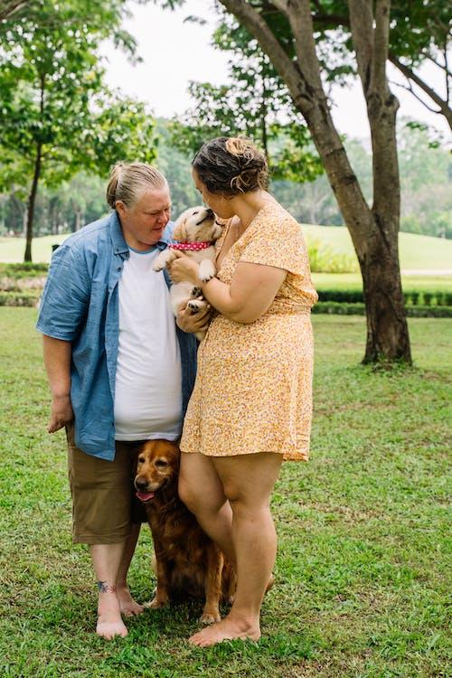 Imagine de stoc gratuită din adorabil, arbori, câine brun