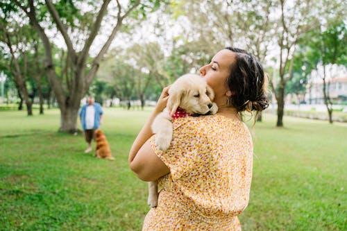 Imagine de stoc gratuită din atinge, atingere, câine brun