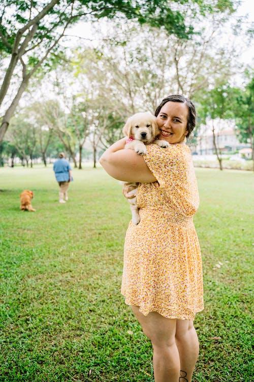 Imagine de stoc gratuită din câine brun, câine proprietar, câmp de iarbă